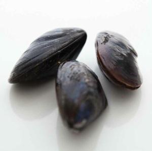 shellfish-mussel-1