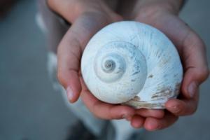 Moon-Snail-Shell-2-1